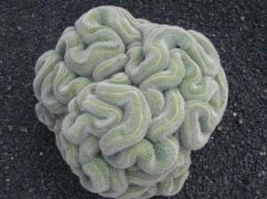 Cactus: desarrollo natural eficiente en ahorro del agua